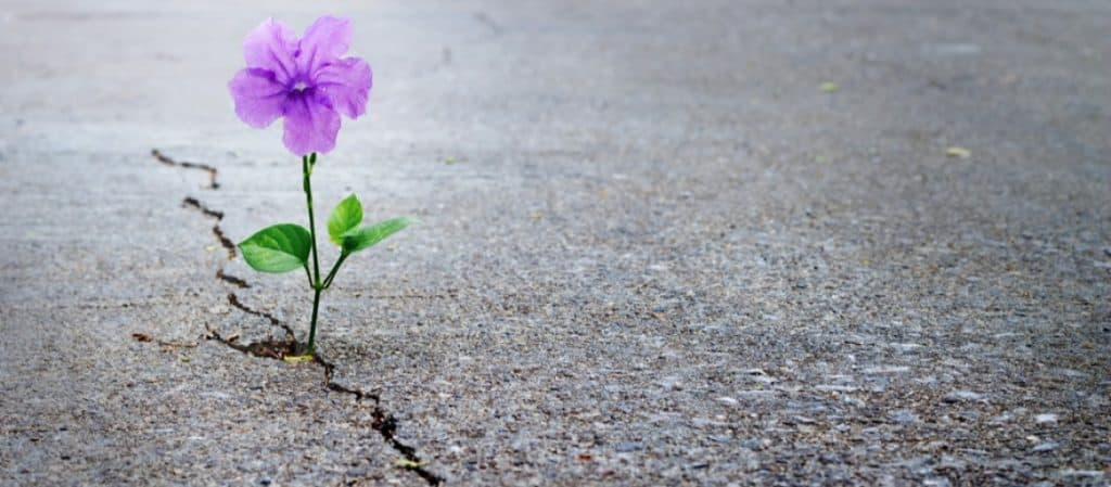notice a tiny purple flower growing through the side of the road-that's her relience